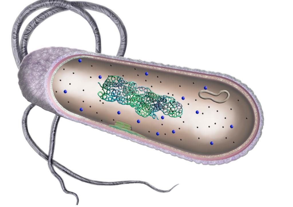 prokaryot canlı bakteri