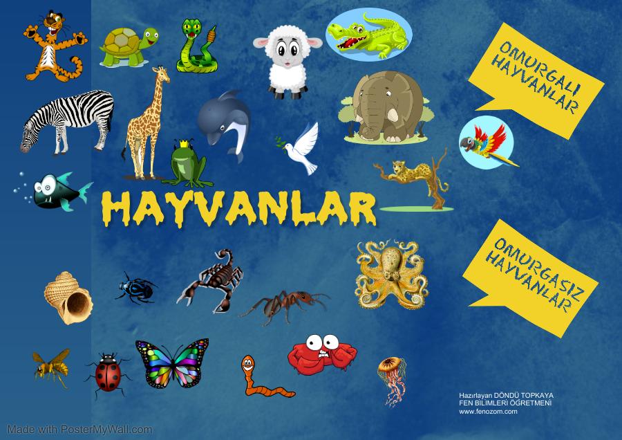 5.sınıf canlılar hayvanlar Fen Bilimleri poster