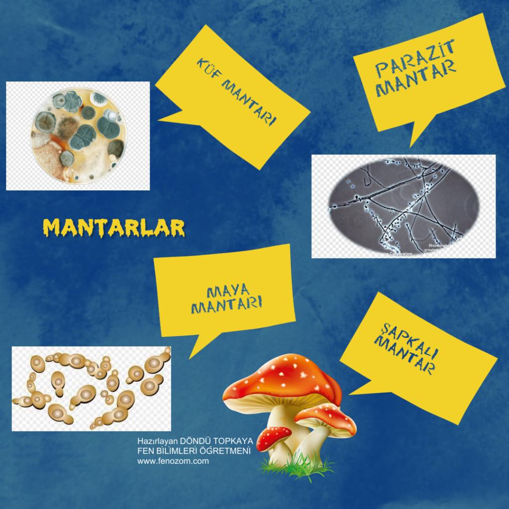 5.Sınıf 2.Ünite Fen Bilimleri Posterler