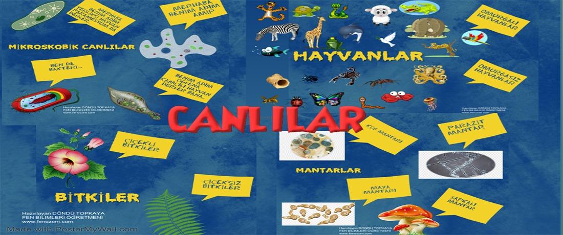5.sınıf canlılar Fen Bilimleri poster