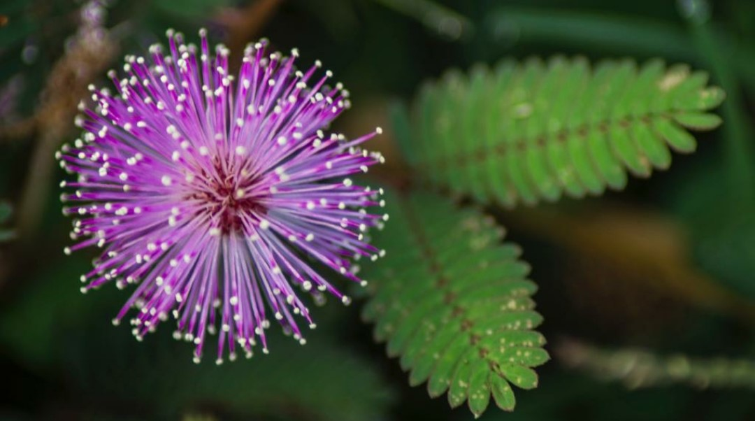 Plants Producing Oxygen