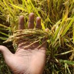 Revival of Organic Farming in agriculture practices of India… Interview with a Farmer