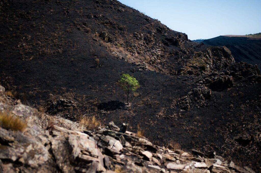 How effective is carbon offsetting