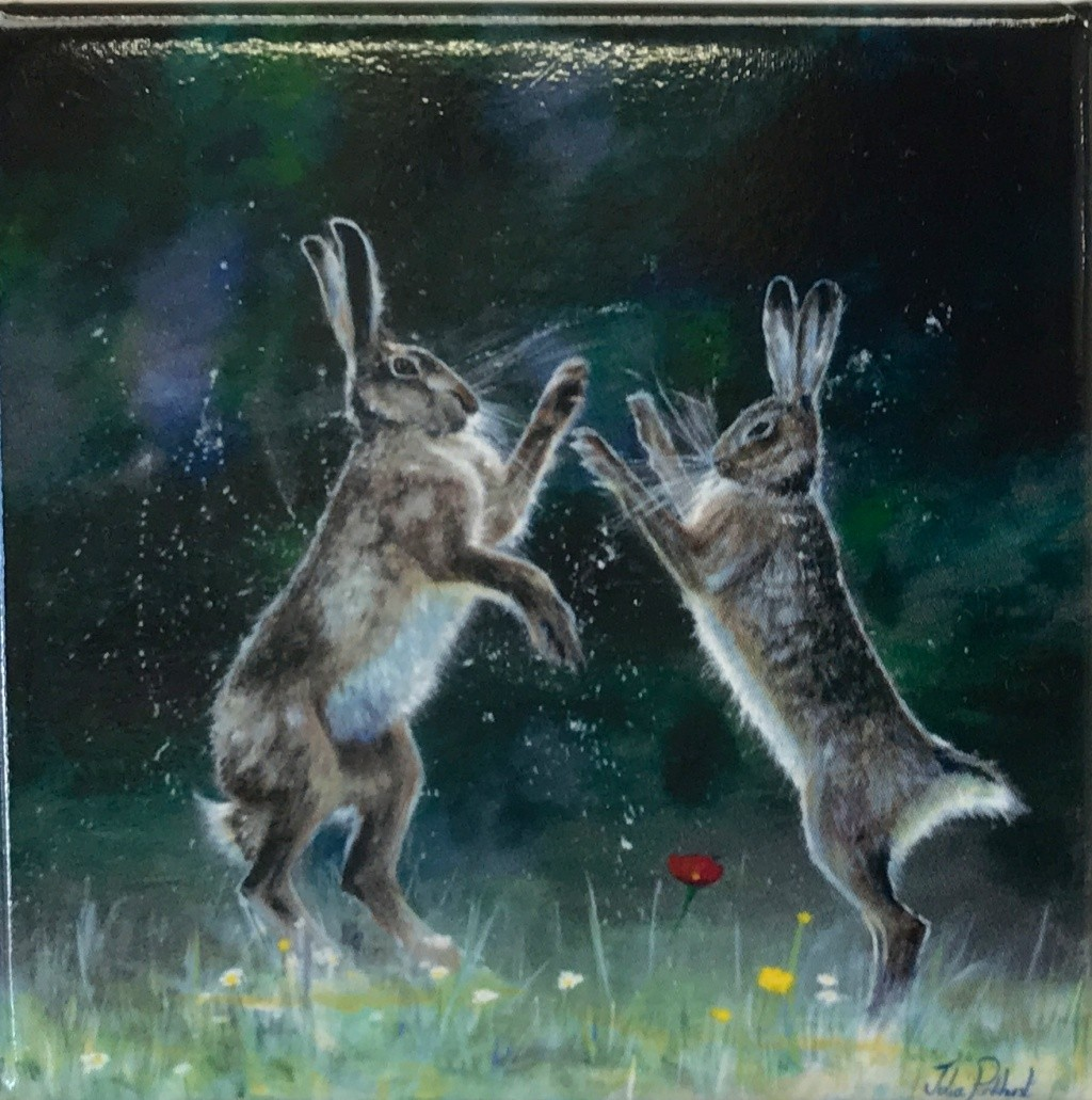 BOXING HARES ANI-047A