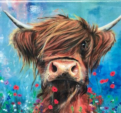 Highland Cow Bruce Gift Magnet Pankhurst Cards and Gifts