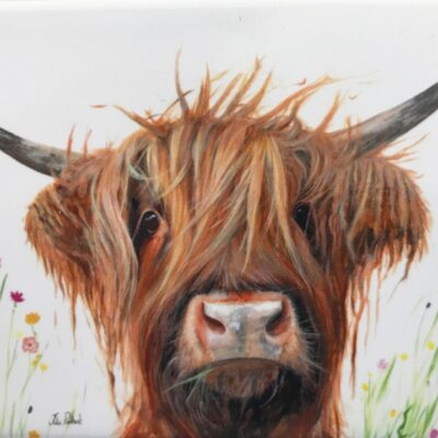 Highland Cow Dennis Gift Magnet Pankhurst Cards and Gifts