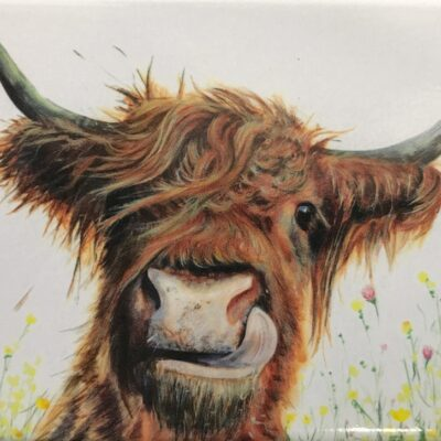 Highland Cow Alfie Magnet Gift Pankhurst Cards and Gifts