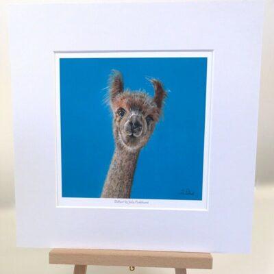Dilbert Alpaca art gift print Pankhurst Cards and Gifts