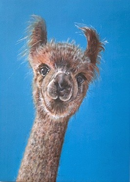 Dilbert Alpaca Art Greetings Card Gift Pankhurst Cards and Gifts