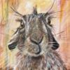 Harold Hare Art Greetings Card Gift Pankhurst Cards and Gifts