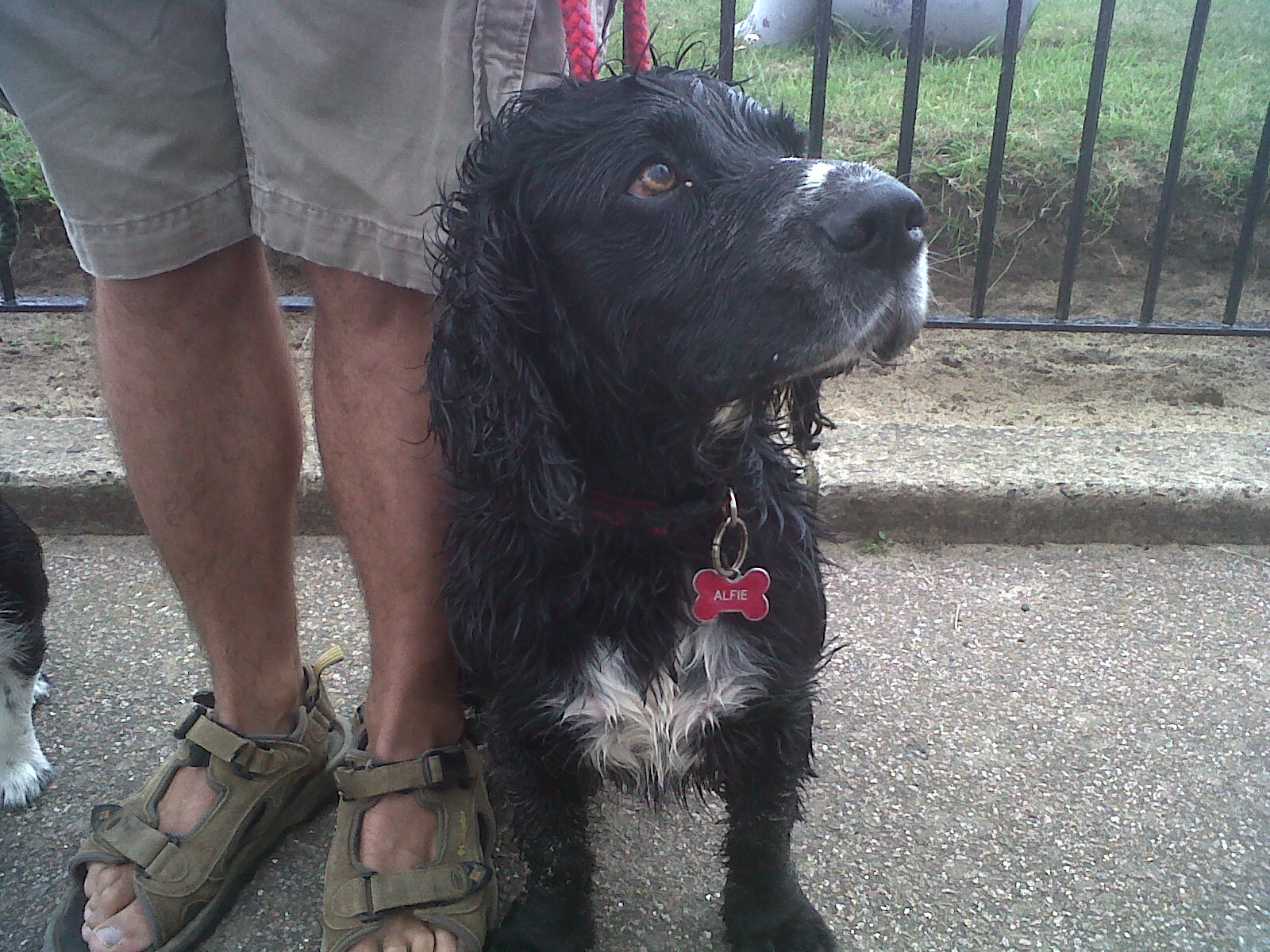 Doggy of the Day, Alfie - 15/07/11