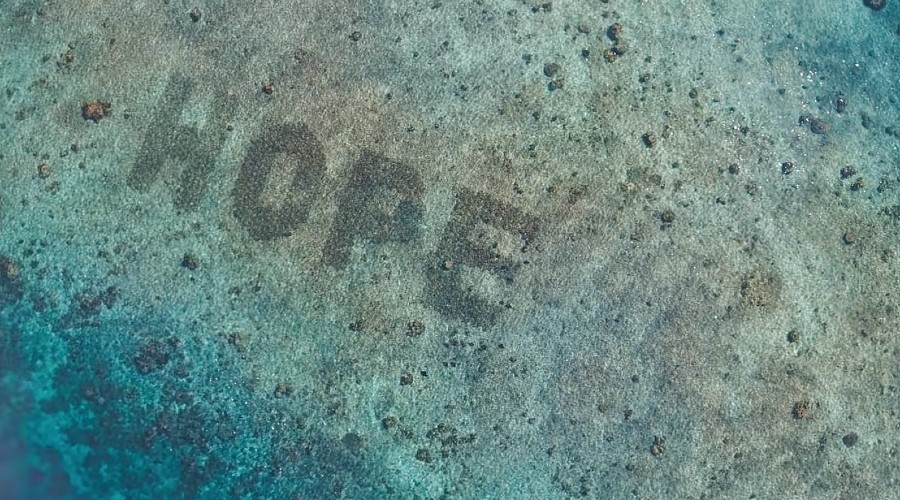 SHEBA's HOPE coral reef