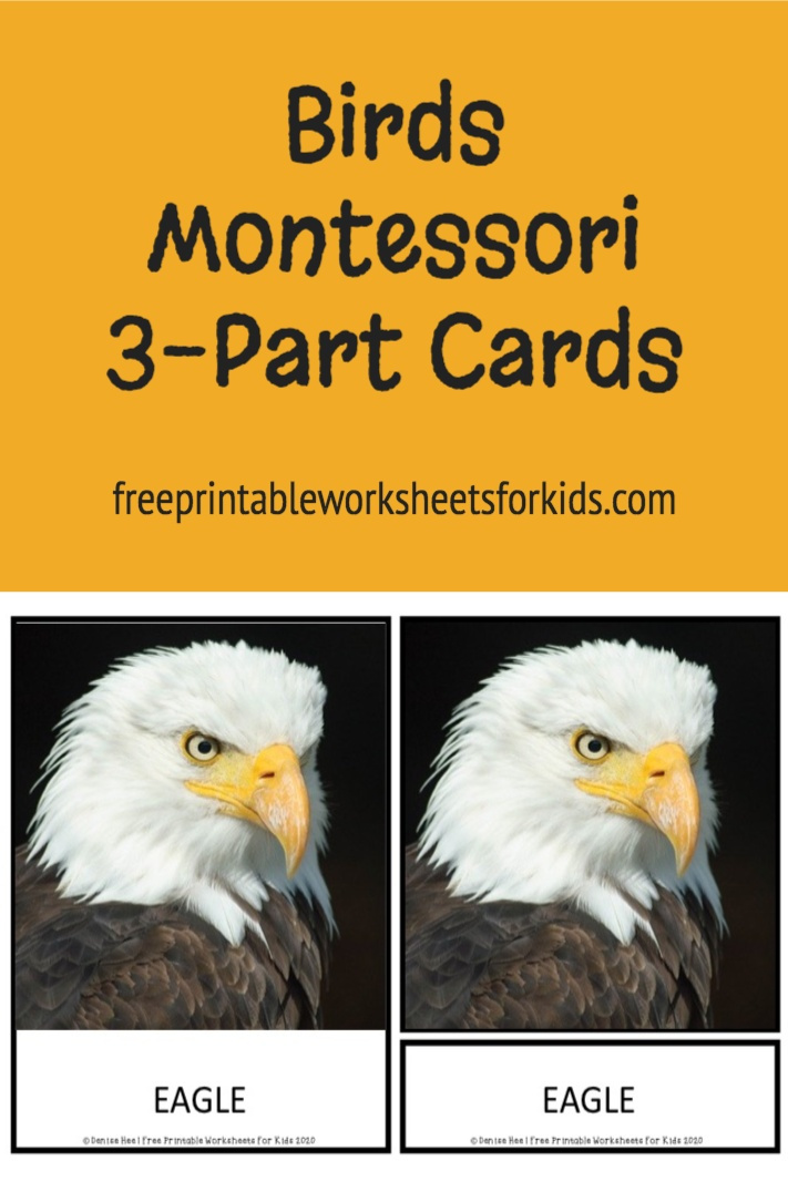 Looking for a bird theme activity? Set up this free printable as proper 3 part cards for a spring literacy activity or as a preschool science center to help your students learn the names of different birds.