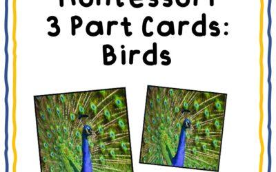 Bird Theme 3 Part Cards