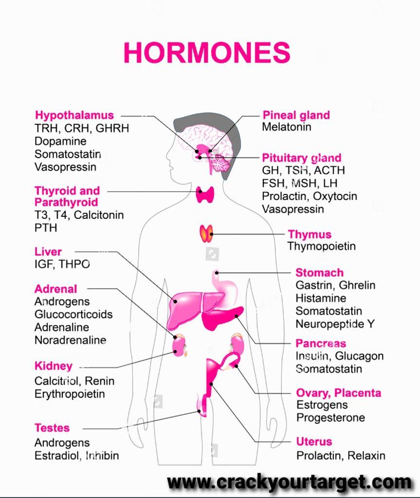 Hormones definition