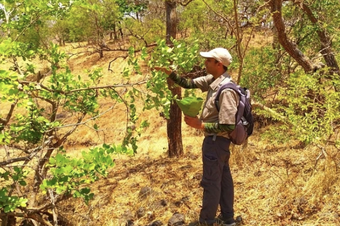 Mohammed Dilawar - This Man Restored 400 Native Plant Species to Create 25 City Forests in Maharashtra
