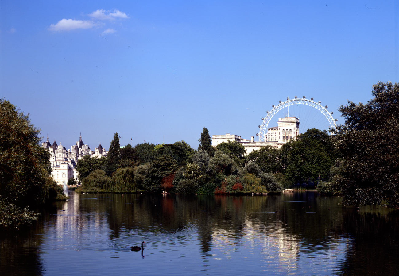 View from St James Park. The London Eye by Marks Barfield Architects