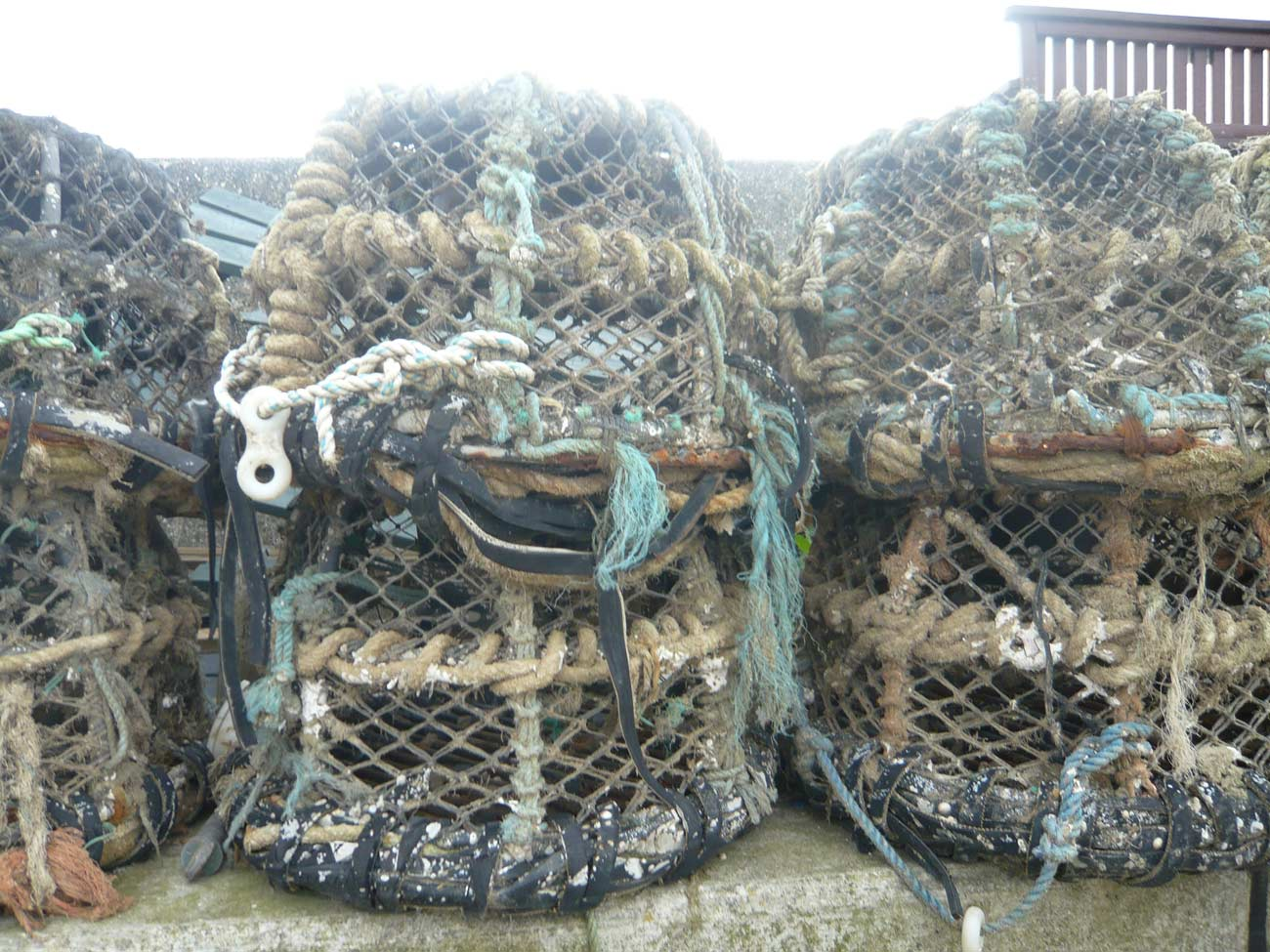 Selsey Marine Centre Concept Image - Lobster Net