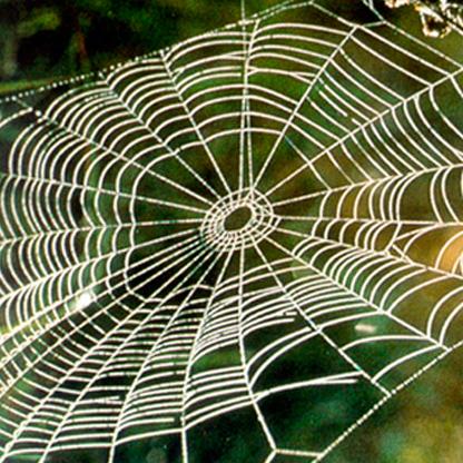 spider web - Regents Park Conceptual Image