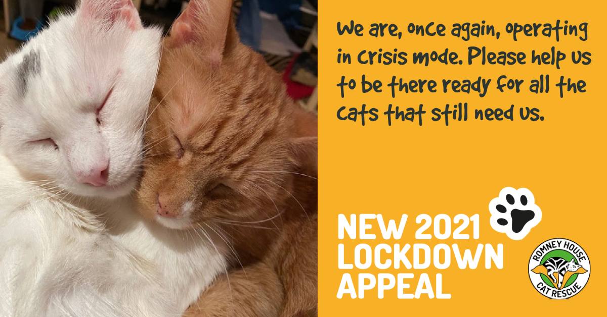 Romney House Cat Rescue Covid Appeal