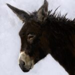 Sally's donkey,  Philine van der Vegte