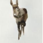 Donkey study,  Philine van der Vegte