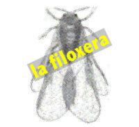 La Filoxera