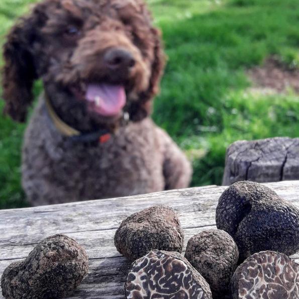 truffle-hunting-dalmatia