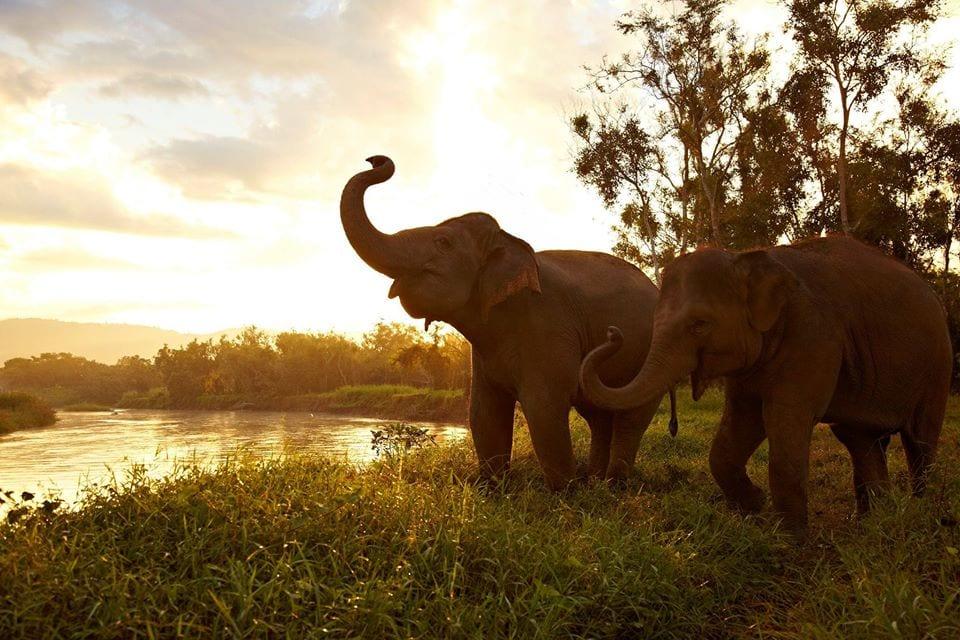 Elefant Anantara