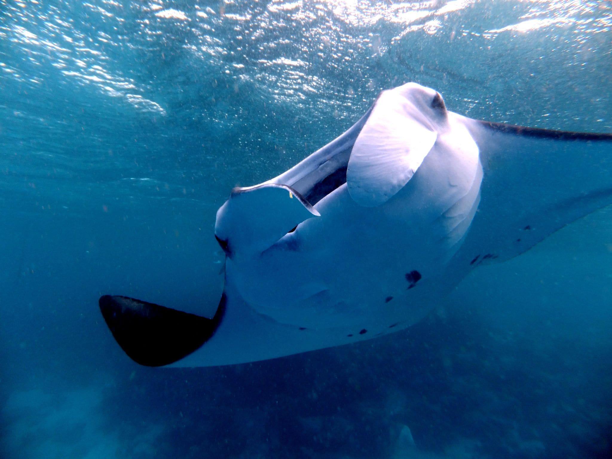 Manta Hanifaru Bay - Reisen in Style Reisebericht Malediven