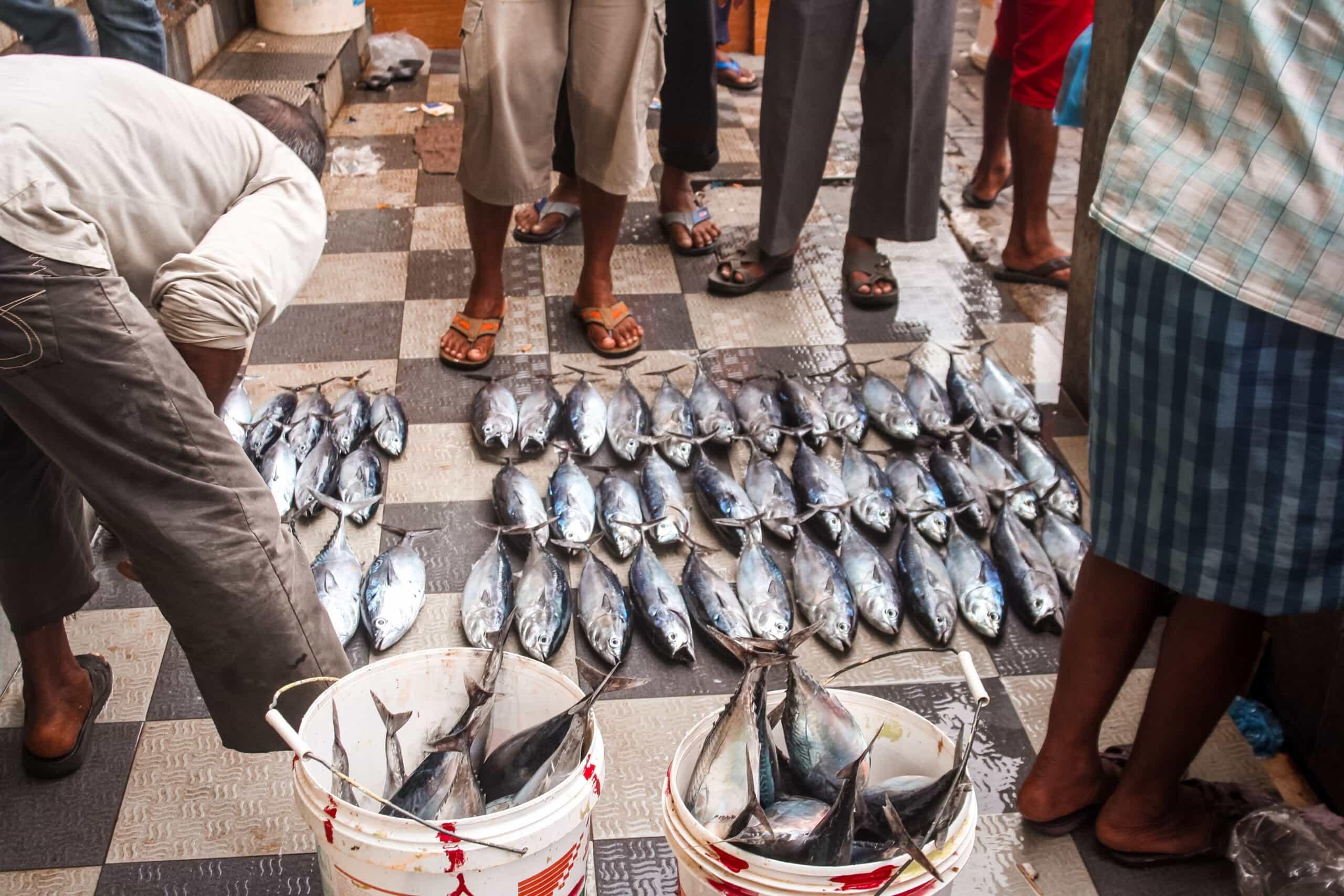 Fisch Markt Male' - Reisen in Style Reisebericht Malediven