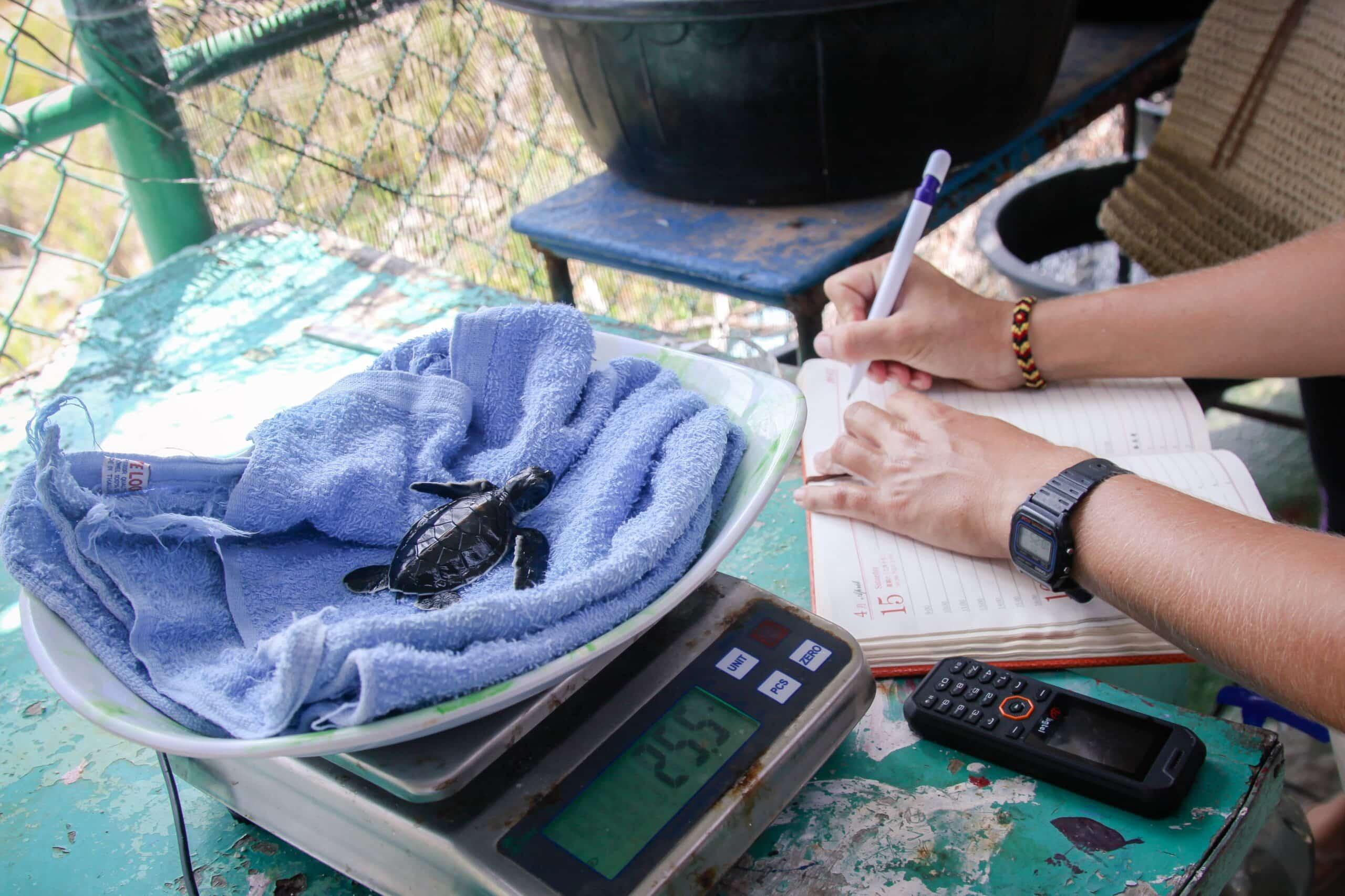 Naifaru Turtle Conservation