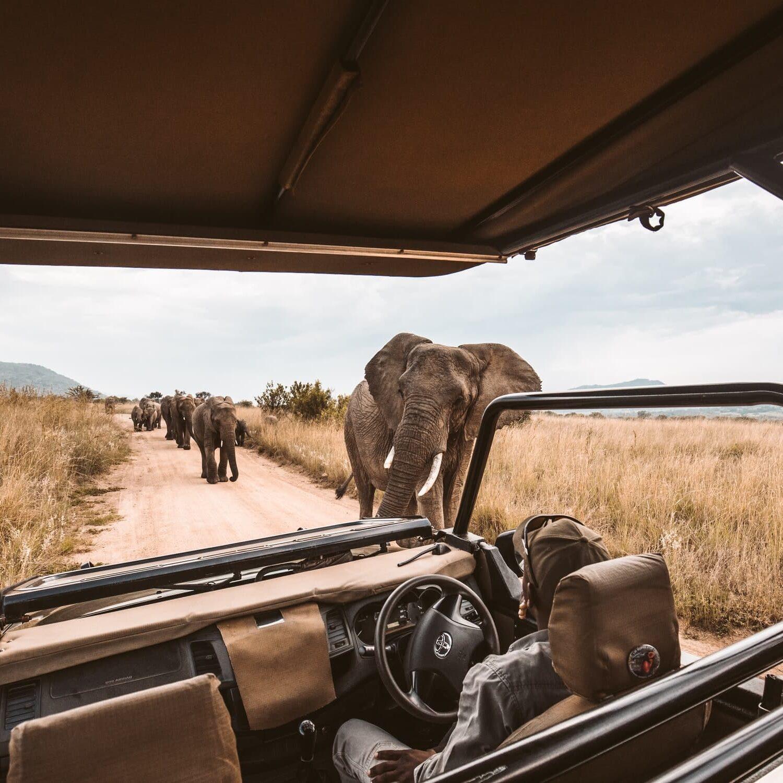 Reisen in Style auf Safari