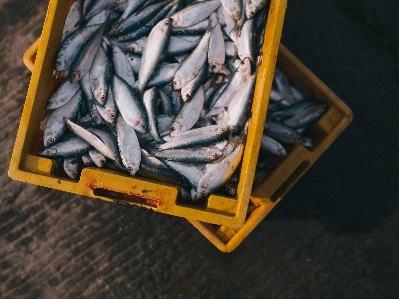 conserver son poisson frais (1)