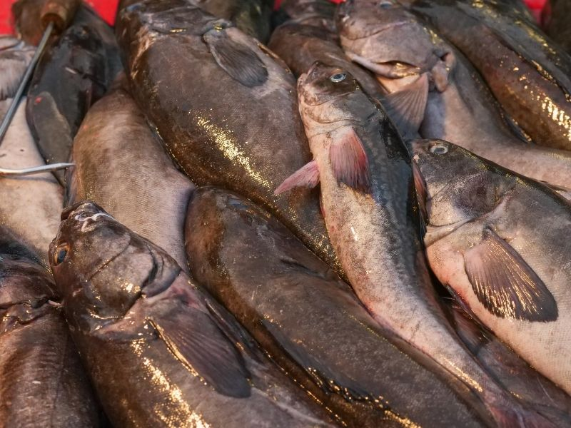 conserver-poisson-frais-au-congélateur