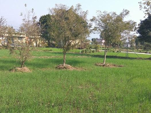 pitless-tree