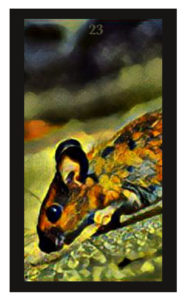 Lenormand Mice Card