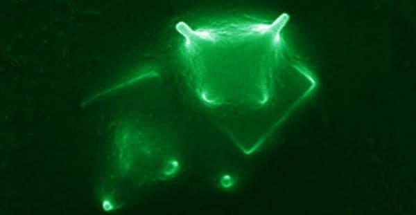 microrganismo vita extraterrestre