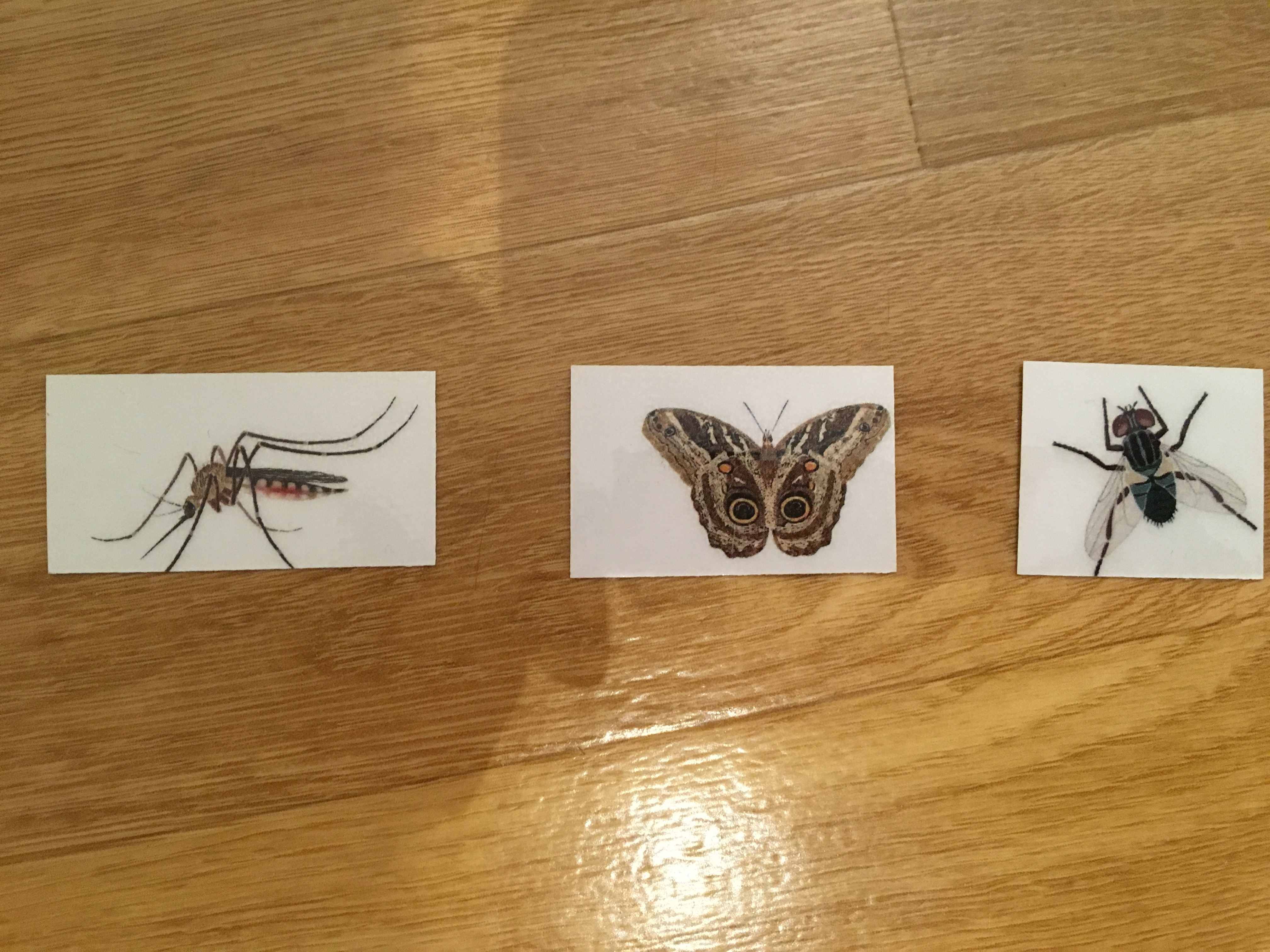 """Catch a bug"" game : mosquito, moth and fly"