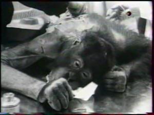 gorillaworkedon