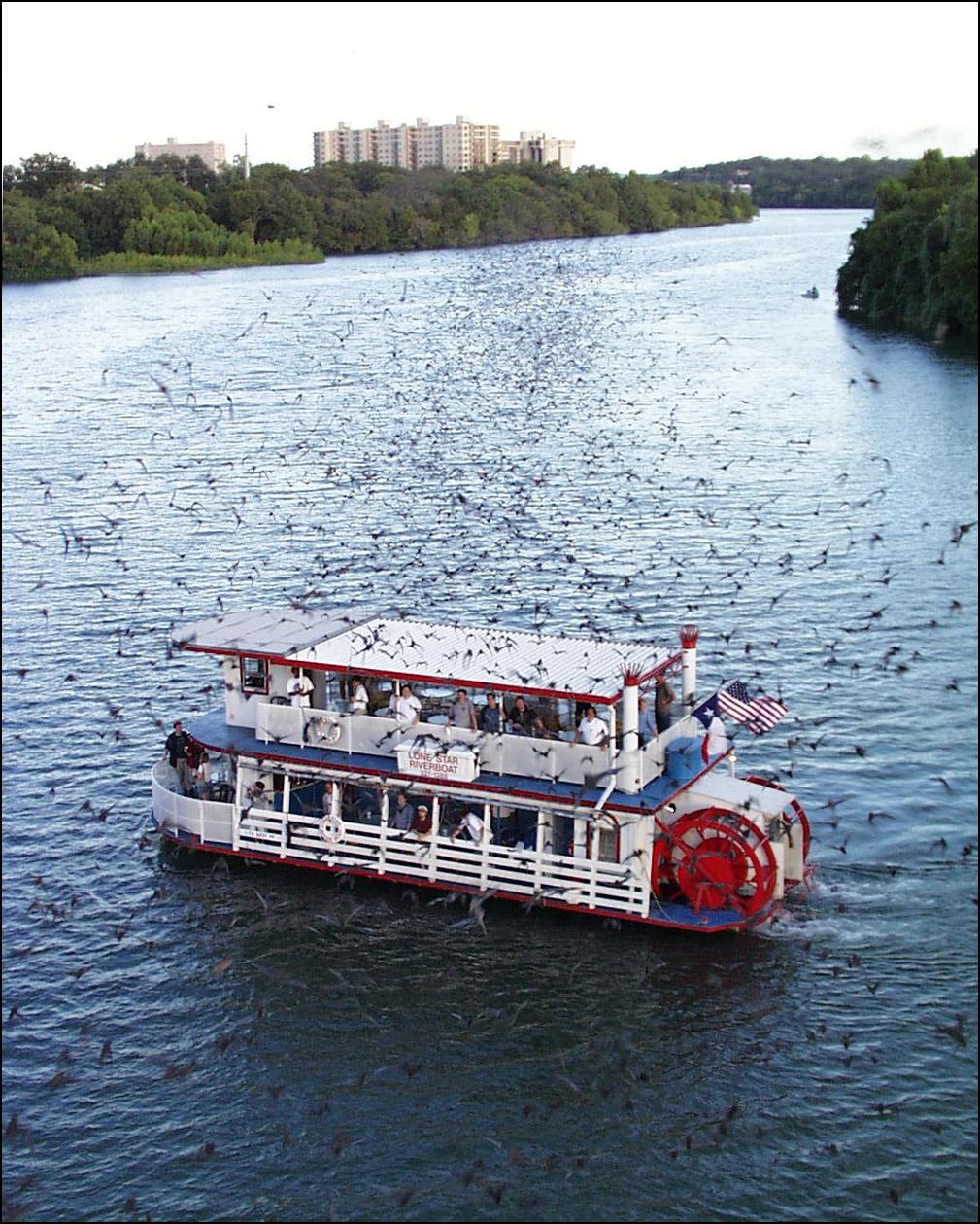 bats-by-town-lake-boat