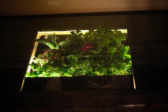 daniel-zeller-terrarium-desk-2