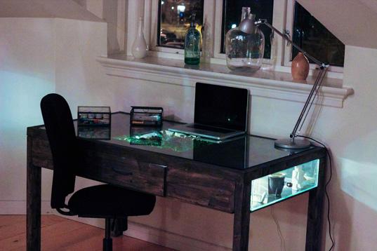 daniel-zeller-terrarium-desk-4