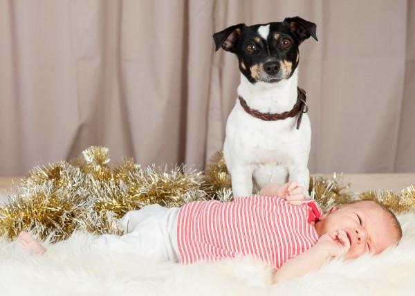 dog-photog-xmas-popup-288-600x428