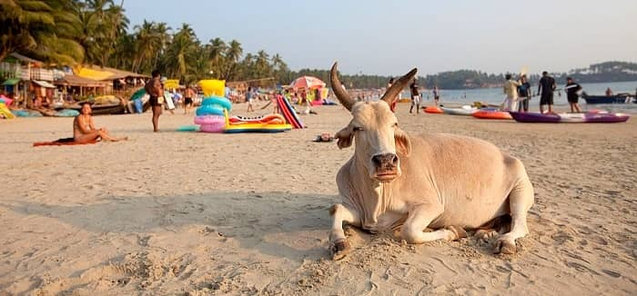 Travel and Yoga in Goa