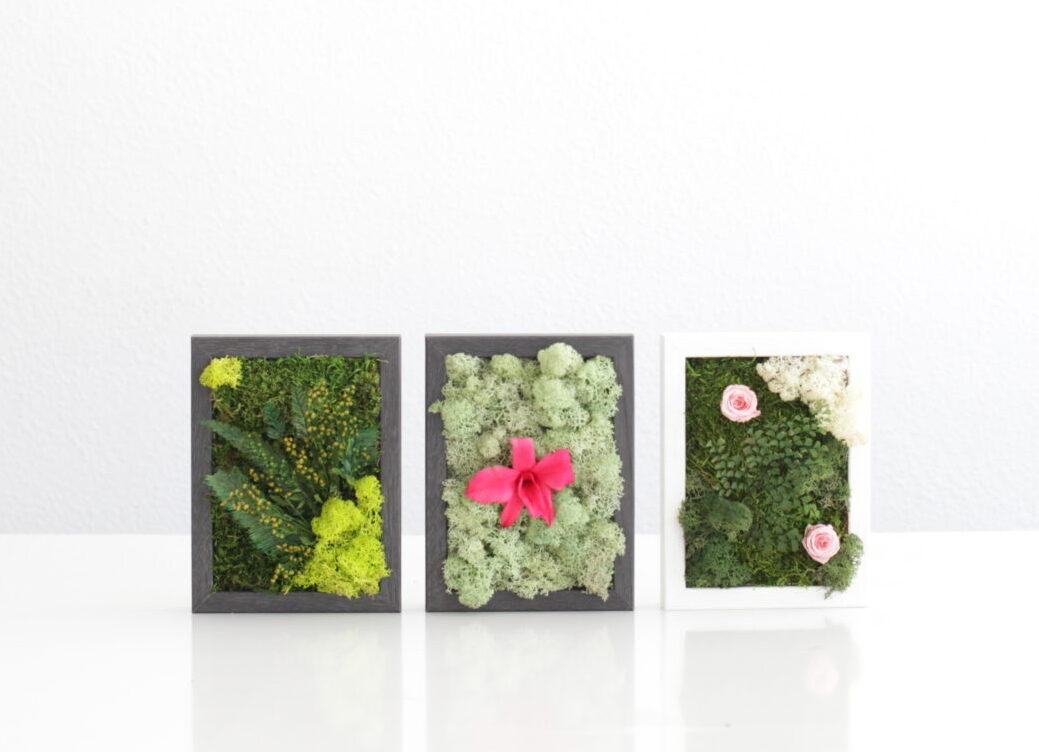 Mini cuadros de musgo y flor