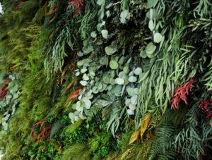 Detalle jardín vertical de planta