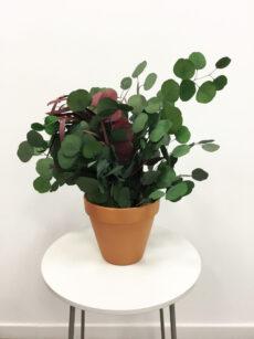 Macetas de planta preservada
