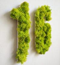 Letras y rótulos de musgo preservado