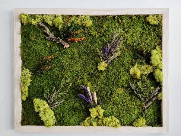 Cuadro de musgo y plantas